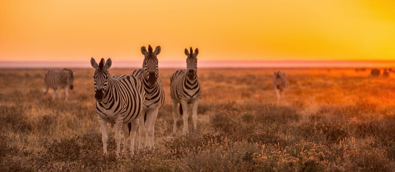 Namibian Highlights, Safari and Waterfalls Tour Trip 1