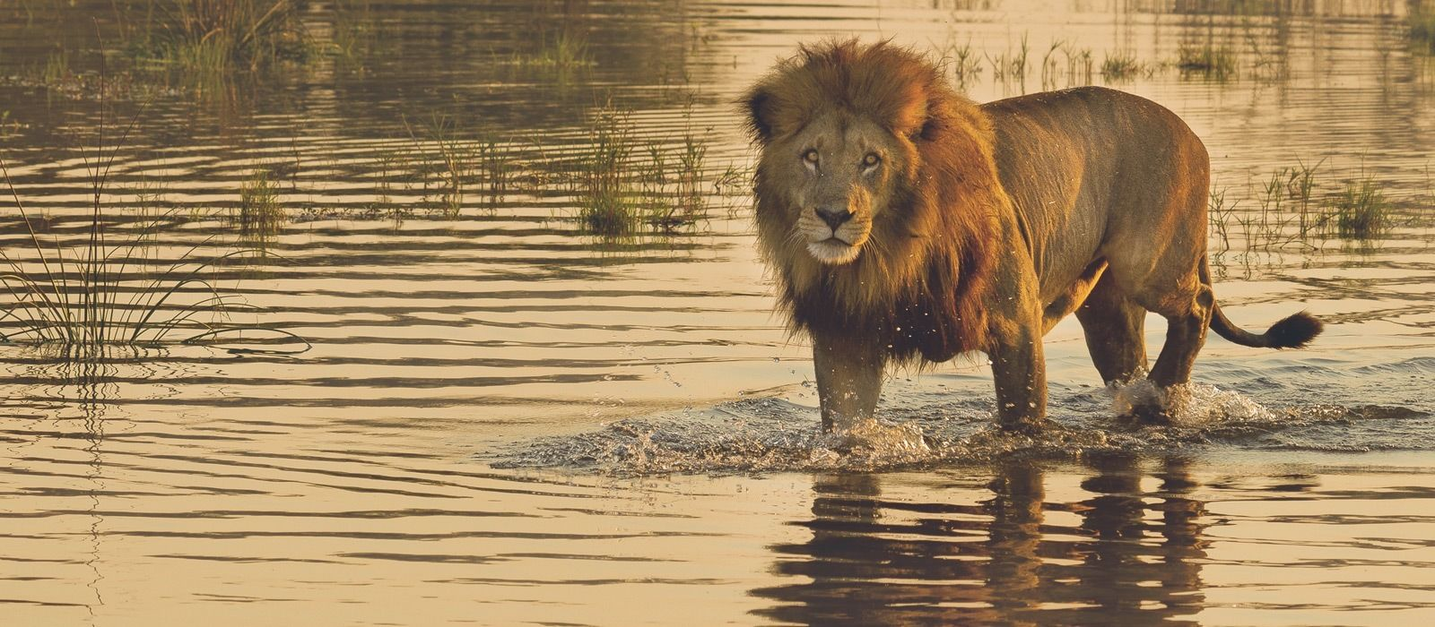 Masai Mara, Meru & Diani Beach – Safari & Strand in Kenia Urlaub 4