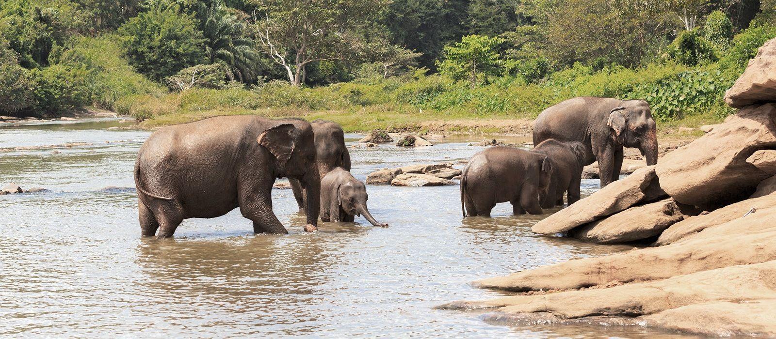 Kultur, Strand & Safaris in Sri Lanka Urlaub 2