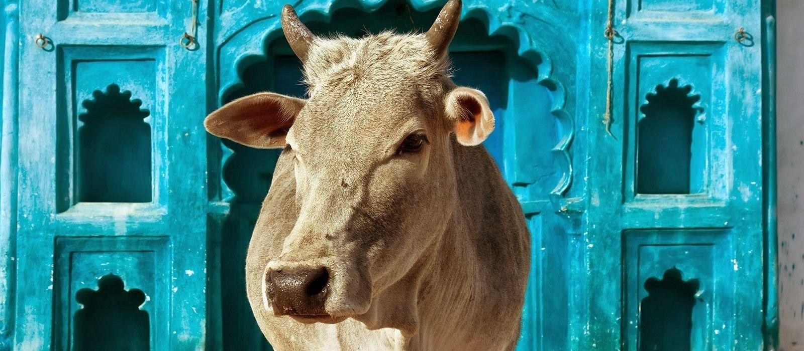 Bezaubernde Nordindien Reise – klassisch & komfortabel Urlaub 10