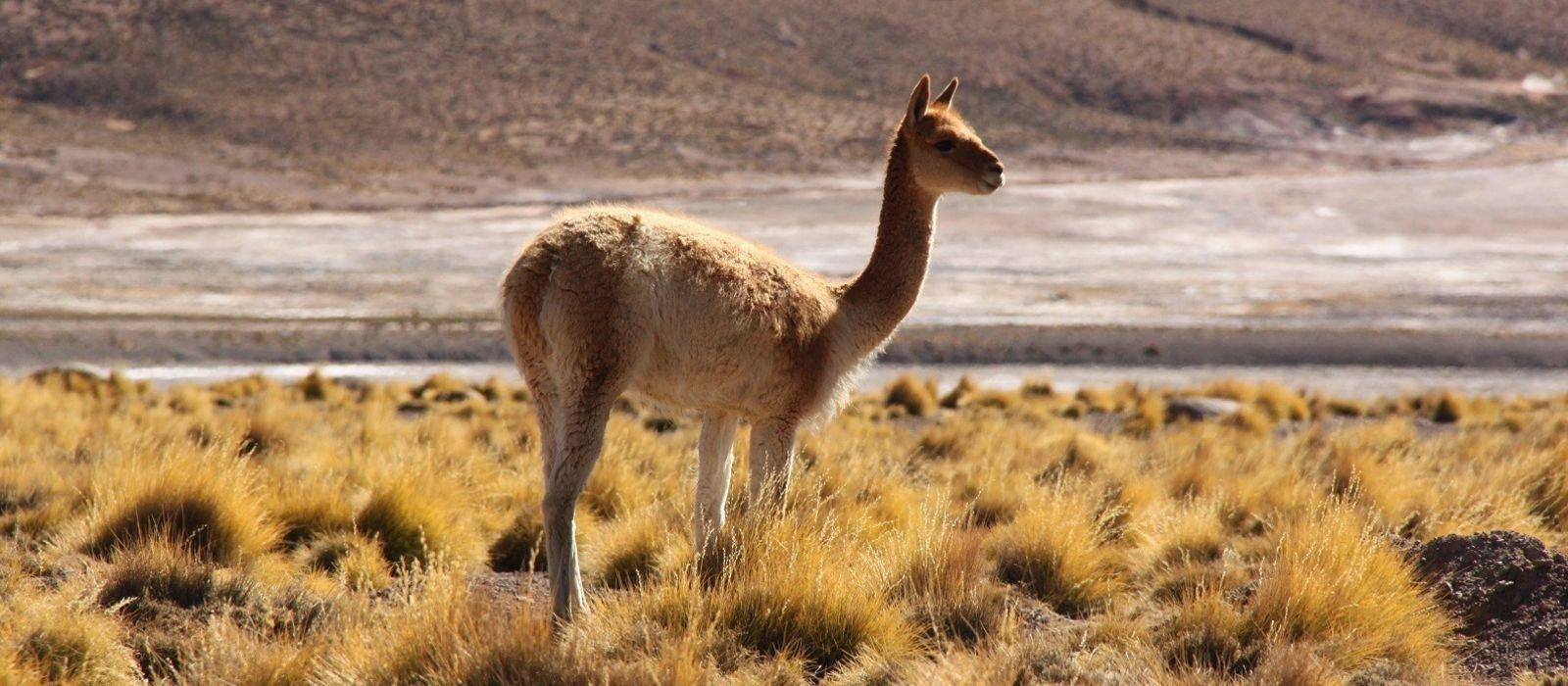 Chile Luxusreise: Außergewöhnlich mit Awasi Urlaub 8