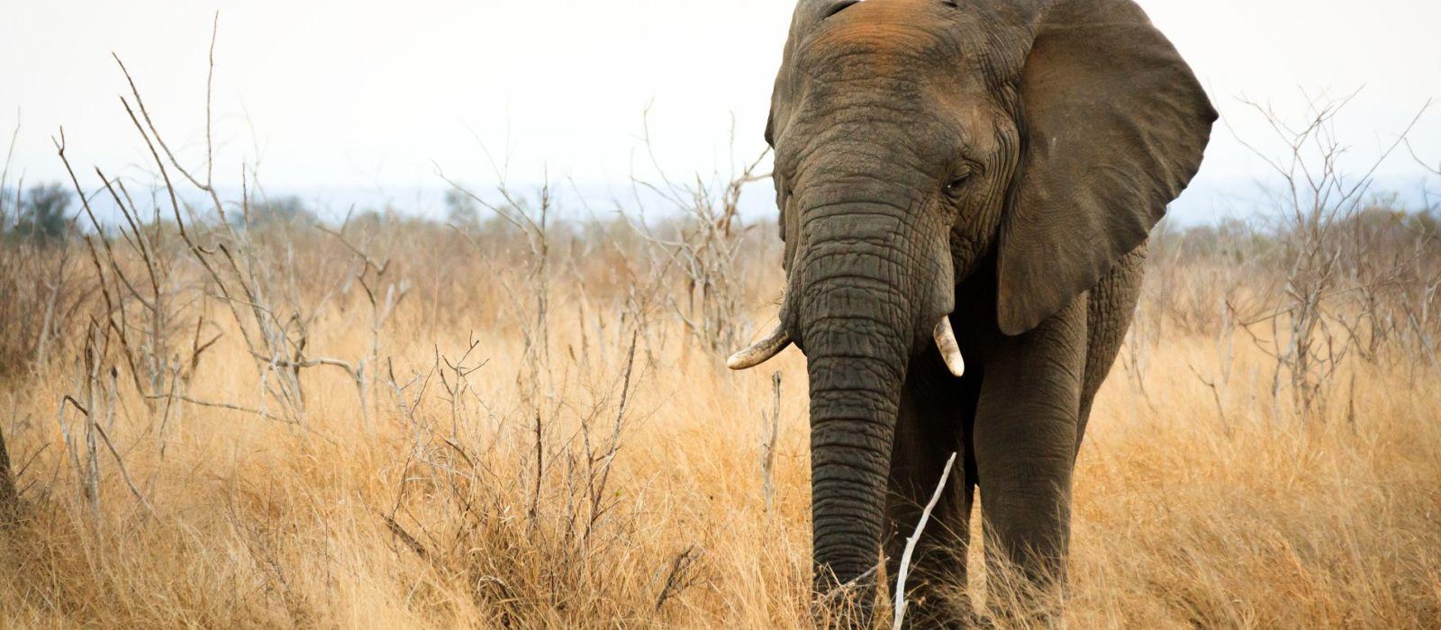 ESwatini (Swaziland) Tours & Trips 1