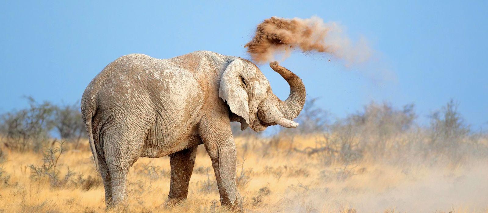 Namibia Rundreise: Höhepunkte des Nordens Urlaub 8