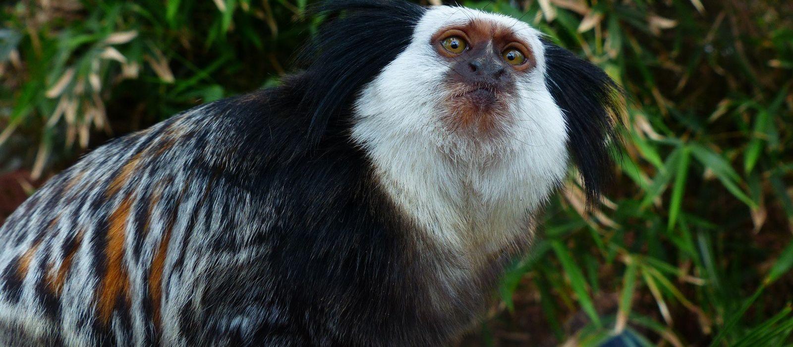 Brazil: Culture & Wildlife Tour Trip 3