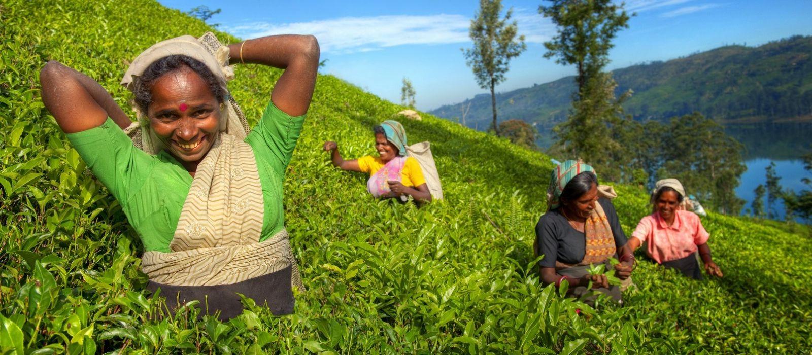 Enchanting Sands and Tea Trails of Sri Lanka Tour Trip 1