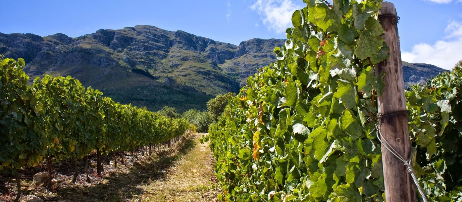 Südafrika: Kapstadt, Westkap und Krüger Nationalpark Urlaub 3