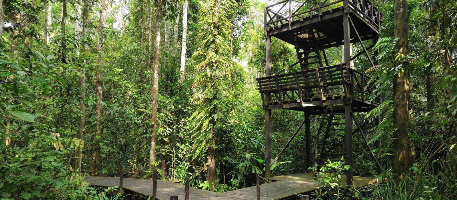 Abenteuer Wildnis – Borneos Dschungel und Strände Urlaub 4