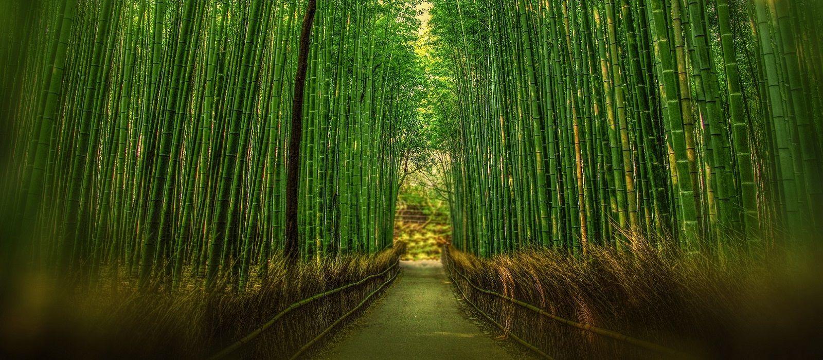 Just Japan: An Introduction Tour Trip 3