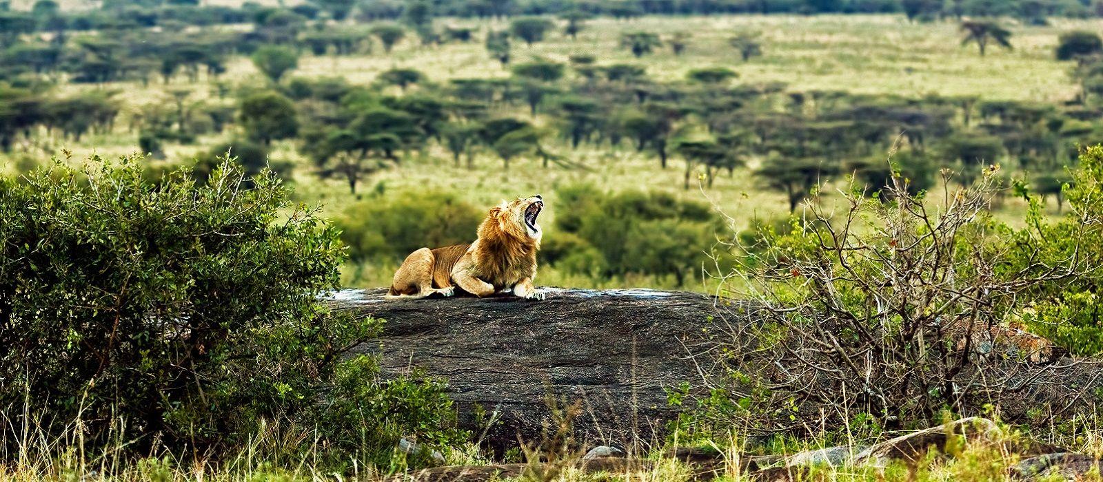 Vom Kilimanjaro zum Viktoriasee Urlaub 4