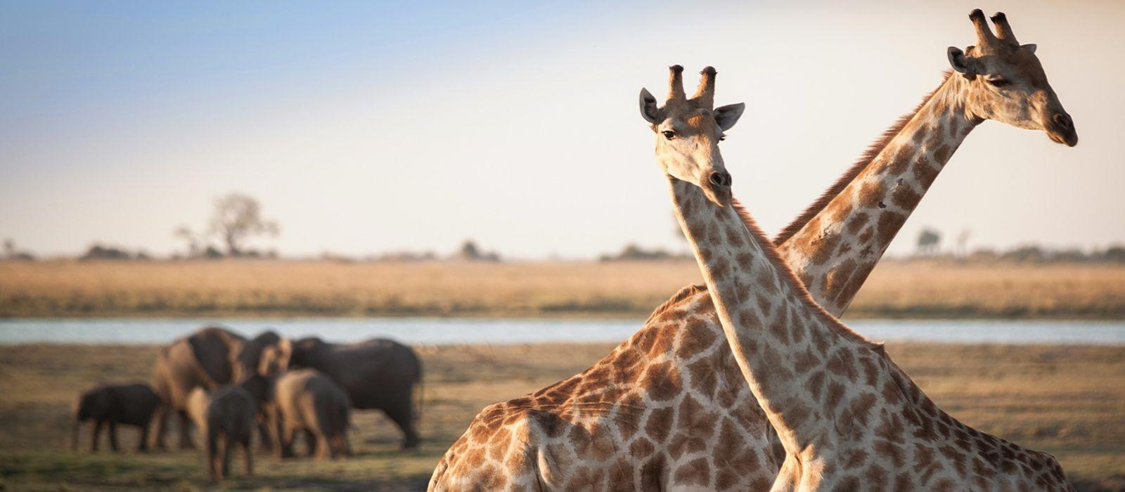 Wings over Botswana Tour Trip 5