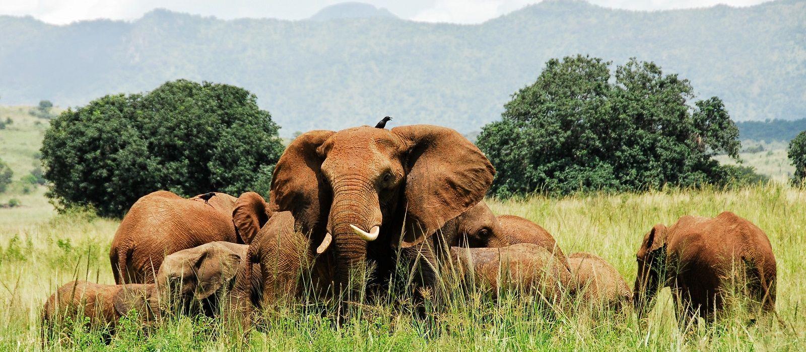 Grand of Uganda Tour Trip 4