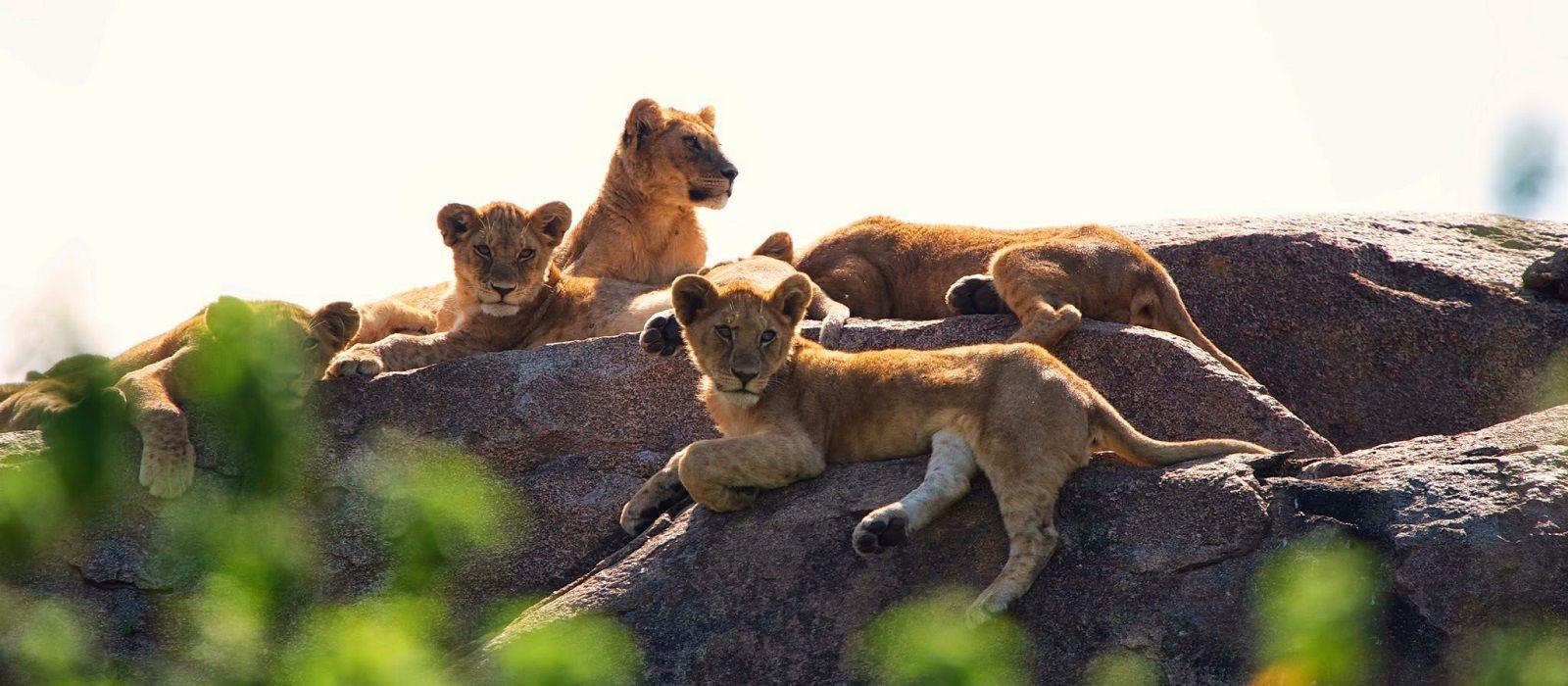 Safari Höhepunkte: Tansania, Simbabwe und Botswana Urlaub 4