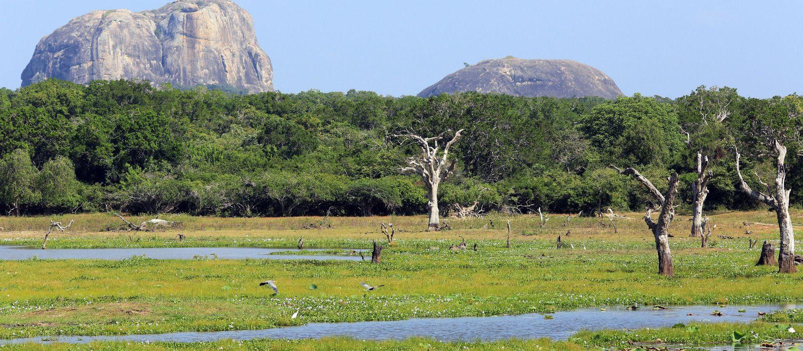 Die Höhepunkte Sri Lankas – Berge, heilige Felsen und Erholung am Strand Urlaub 2