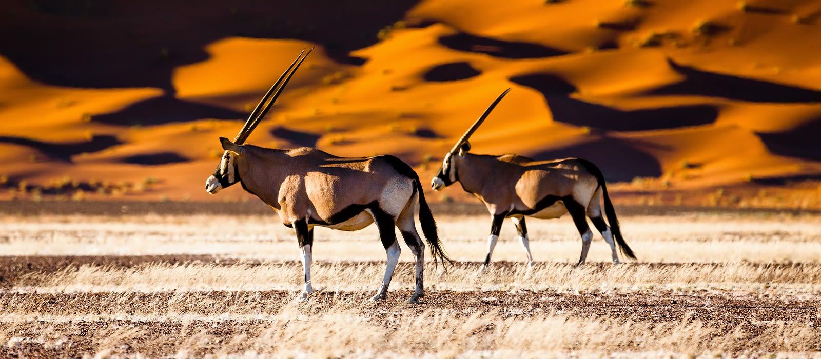 Namibias schönste Landschaften von oben Urlaub 4
