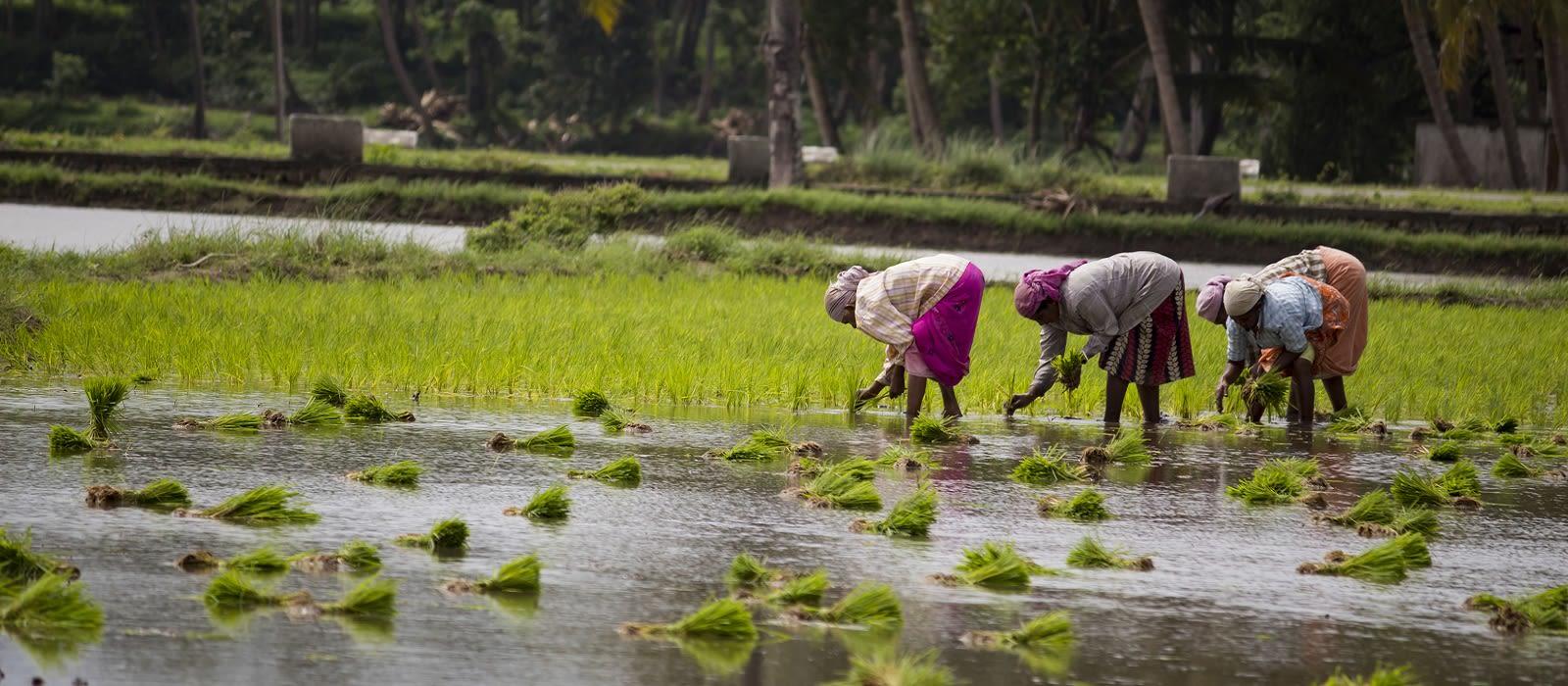 Klassische Reise nach Kerala: Backwaters und wilde Natur Urlaub 2