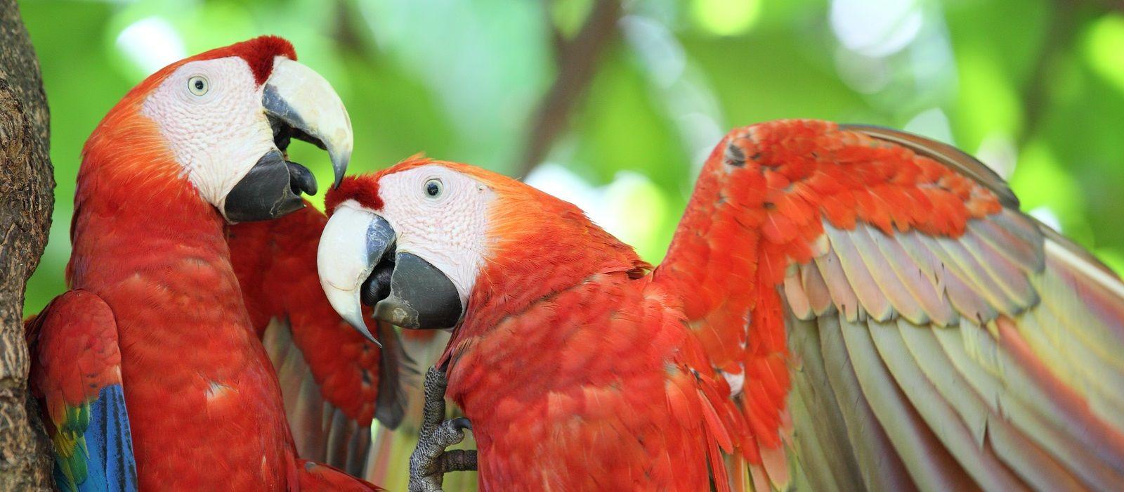 Schätze von Costa Rica und Guatemala Urlaub 3
