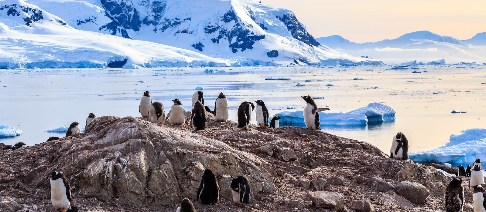 Antarktis Reisen & Rundreisen 1