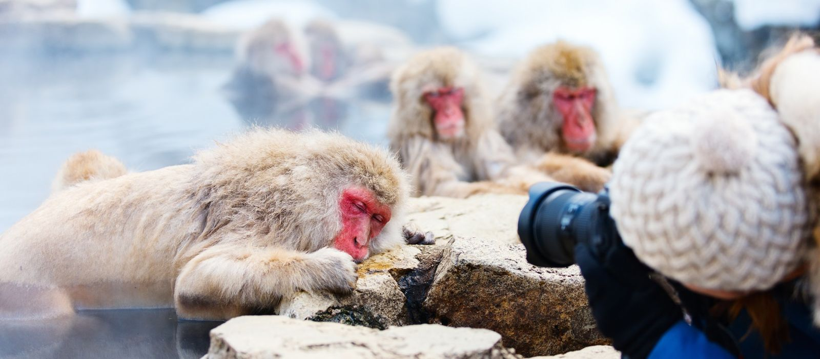 Japan: Northern Gems, Nature and Wildlife Tour Trip 4