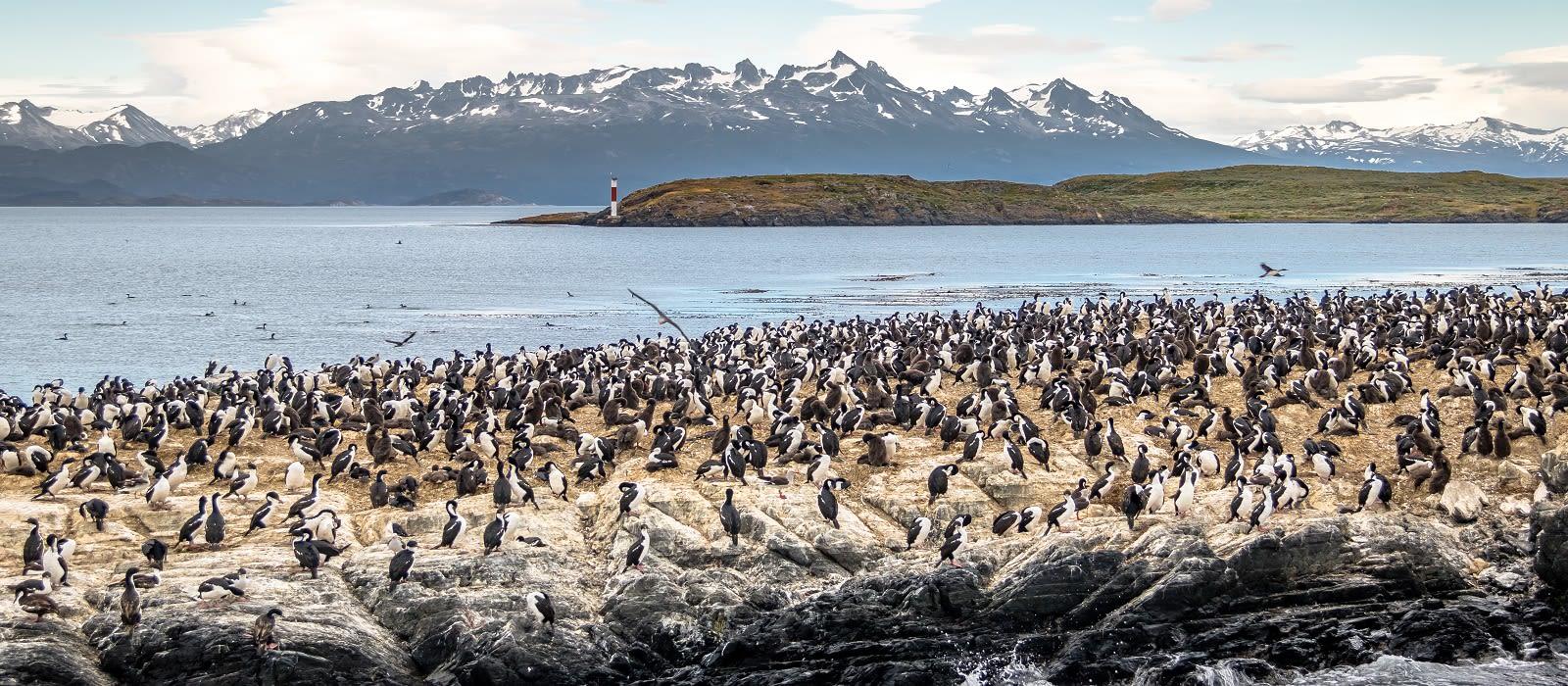 Abenteuer im Südlichen Ozean: Falkland Inseln und Antarktis Urlaub 1