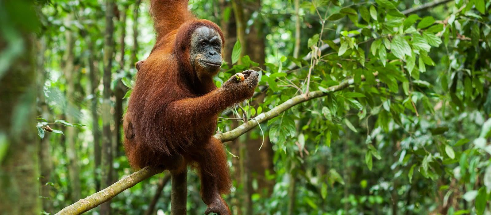 Die Highlights von Sulawesi und Sumatra Urlaub 2