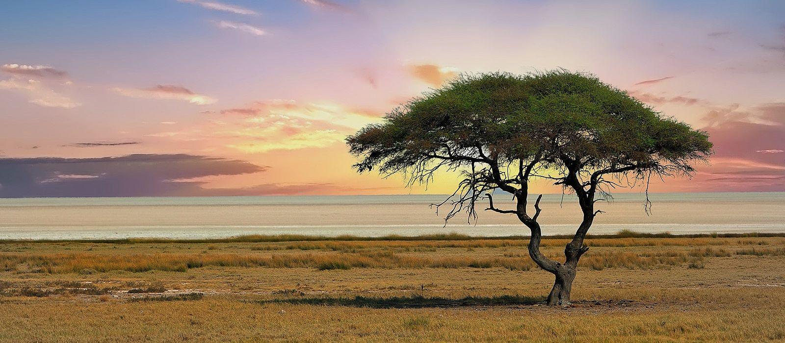 Familienreise durch Namibia für Selbstfahrer: Die Höhepunkte des Nordens Urlaub 1