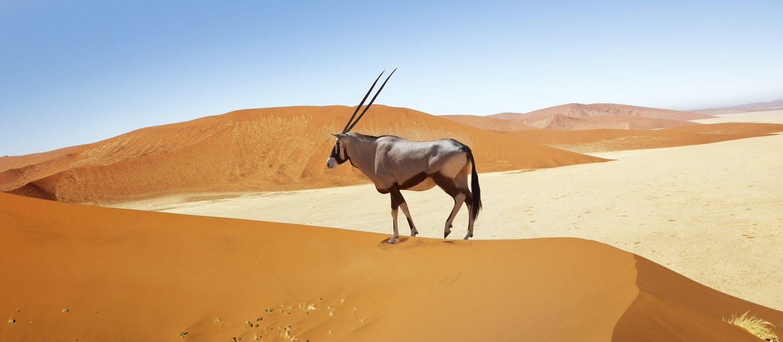 Namibia Flugreise: Die Klassiker Urlaub 1