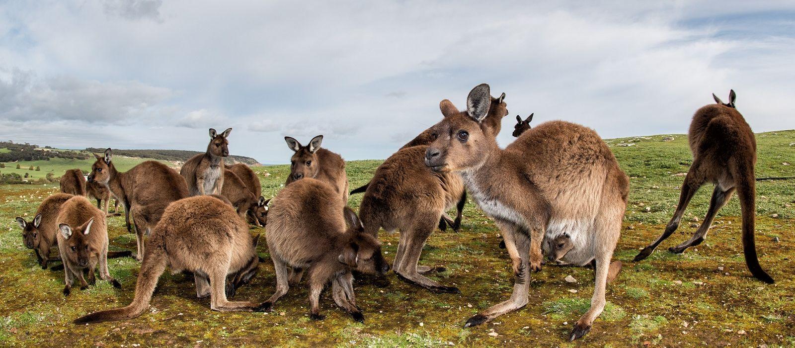Australien Luxusreise: Natur, Kultur & paradiesische Inseln Urlaub 1