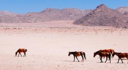 Reiseziel Aus Namibia