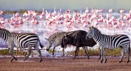 Reiseziel Ngorongoro Krater Tansania