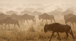 Reiseziel Zentrale Serengeti Tansania