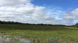 Destination Pantanal South Brazil