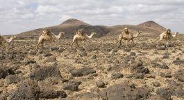 Reiseziel Chalbi Wüste Kenia