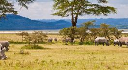 Destination Lake Baringo Kenya