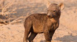 Destination Tuli Game Reserve Botswana