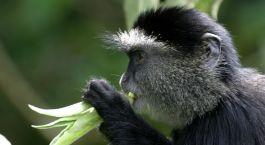 Reiseziel Kakamega Forest Kenia