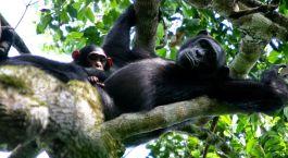 Reiseziel Semliki Uganda