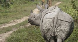 Destination Kaziranga East India