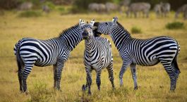Destination Arusha Tanzania