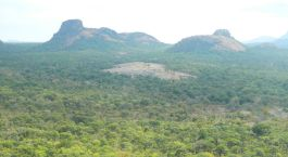 Destination Niassa Game Reserve Mozambique