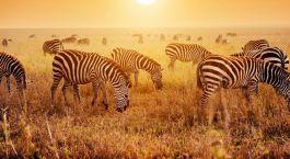 Destination Pangani Tanzania
