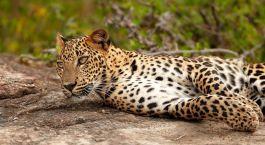 Parque Nacional de Udawalawe Sri Lanka