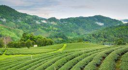 Darjeeling Inde De l'est