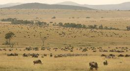 Reiseziel Shaba Kenia