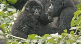 Reiseziel Butare Ruanda