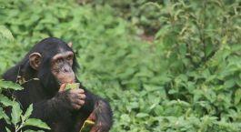 Destination Budongo Forest Uganda