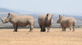 Reiseziel Laikipia Kenia