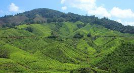 Reiseziel Cameron Highlands Malaysia