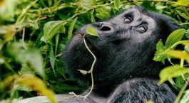 Destination Butare Rwanda
