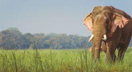 Destination Dudhwa National Park North India