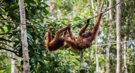Destination Bukit Lawang Indonesia